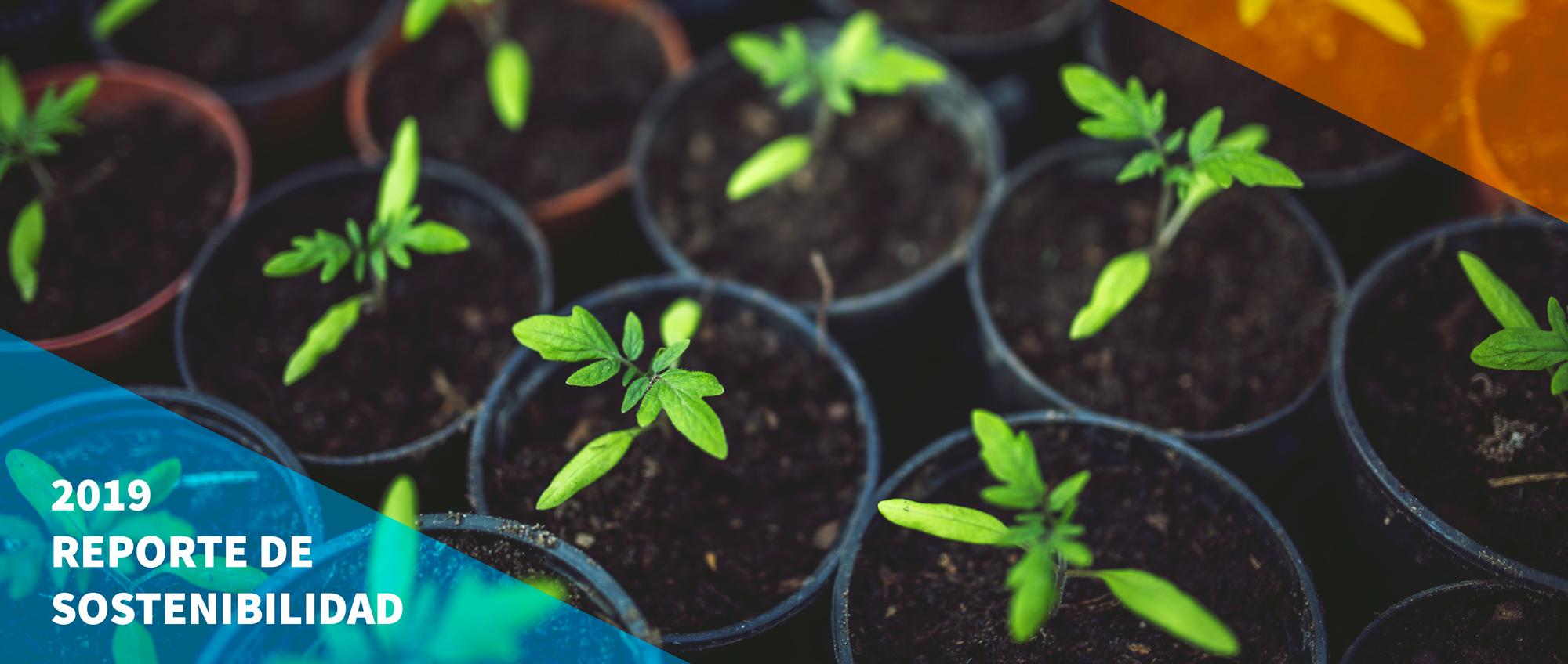 Informe de sostenibilidad